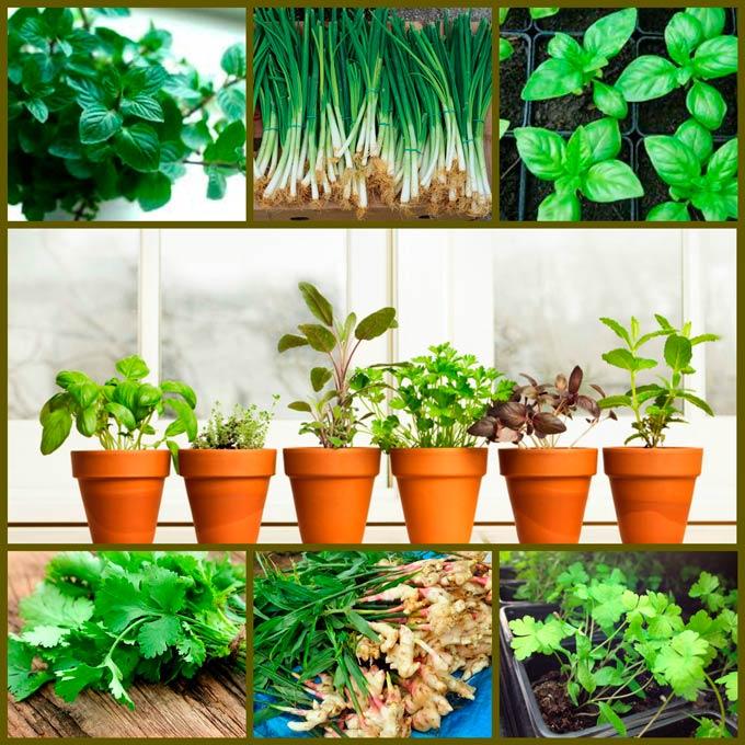 8 трав, которые можно вырастить на кухонном подоконнике 74